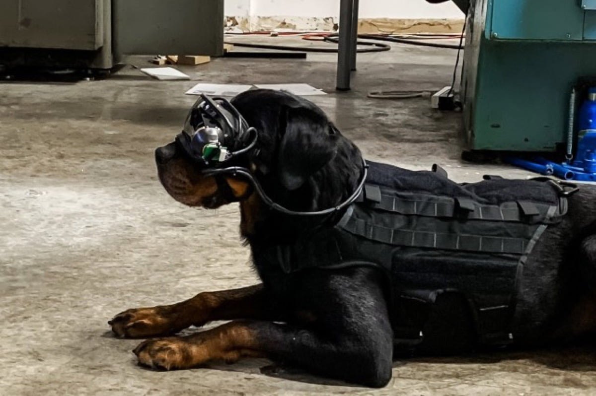AR goggles tested on US Army dogs